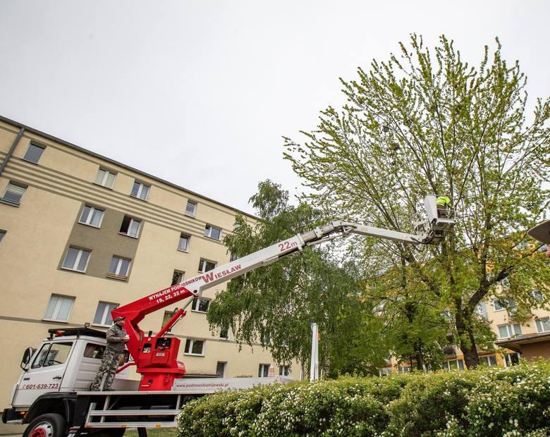 - Uwaga - ratujmy drzewa!!! Zostało mało czasu!!! W miejsce starego klonu planowane jest postawienie śmietnika - alarmowali mieszkańcy ulicy Gajowej