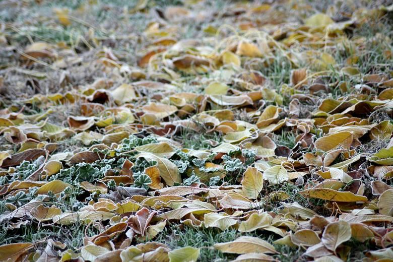21-31 października 2019W trzeciej dekadzie października będzie naprawdę chłodno. Noce będą rześkie, a poranki bardzo zimne. Pojawią się pierwsze przymrozki.
