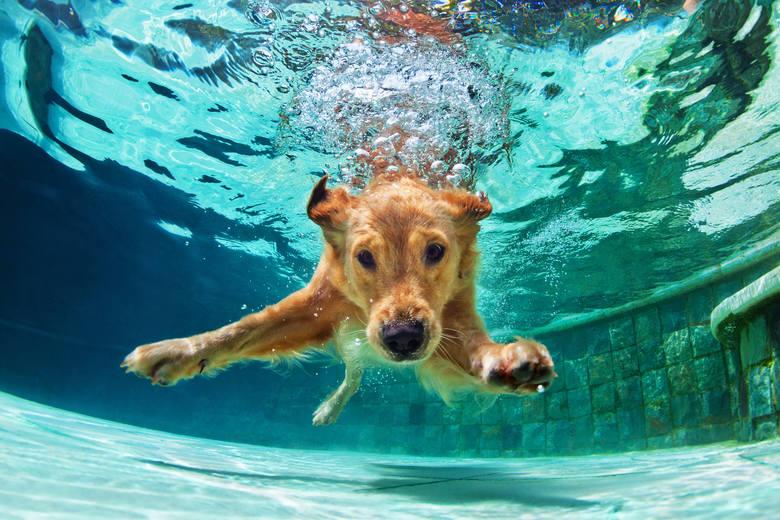 Urlop z psem to najlepsze wspomnienia! Może jednak zamienić się koszmar, jeśli zapomnisz o jednej z tych rzeczy