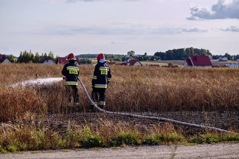 - W zeszłym roku na terenie naszego województwa było 1696 pożarów traw, w wyniku których rannych zostały 2 osoby - podaje nam Arkadiusz Piętak z Komendy