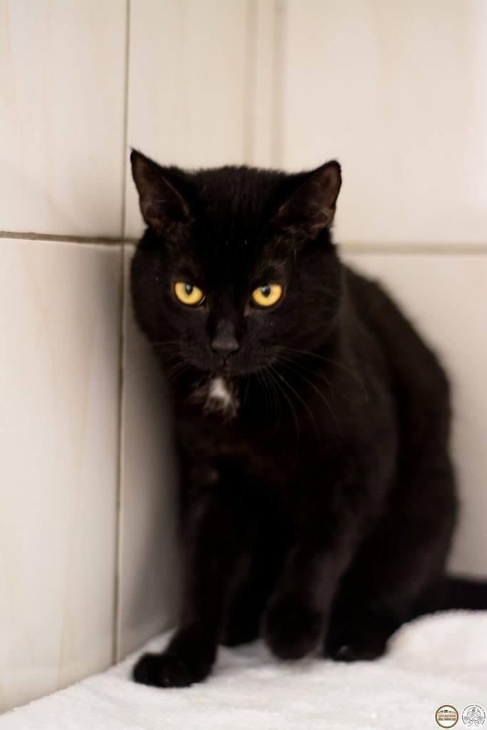 Szybko (takie ma niezwykłe imię) to kot po przejściach. Ale dobrze dogaduje się z innymi kotami przebywającym na kociarni, nie wchodzi z nimi w konflikty, a raczej zaczepia do zabawy. Lubi interakcję z człowiekiem.
