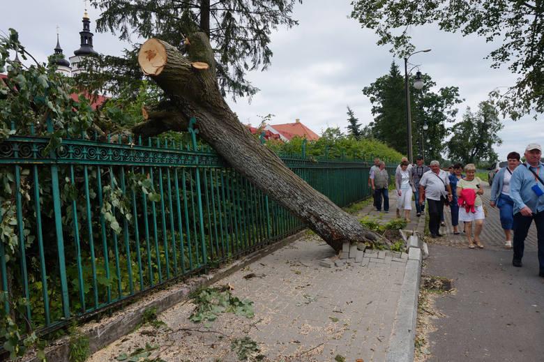 Powyrywane z korzeniami drzewa. Tak wyglądał miejski park po wichurze w czerwcu. Teraz miasto chce go odnowić.
