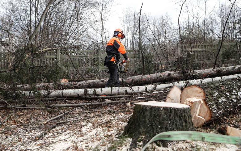 - Z bolącym sercem i łzami w oczach patrzymy, jak właściciel wycina drzewa z lasku koło naszych domów - zaalarmowali nas mieszkańcy ul. Orlej w Rzeszowie.