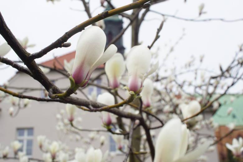Wiosną skarżymy się na zły nastrój, brak energii, kłopoty ze snem