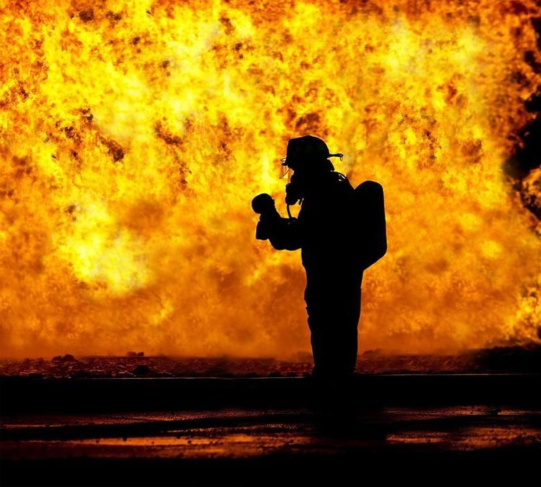 Setki prosiąt spłonęły w wielkim pożarze wielkopolskiej chlewni