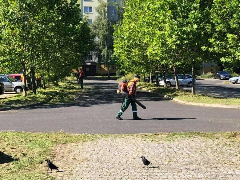 MZUK prowadzi prace porządkowe w wielu miejscach. Jeśli jest taka potrzeba - to trawa zostaje skoszona. W mieście powstaje jednak coraz więcej łąk kwietnych.