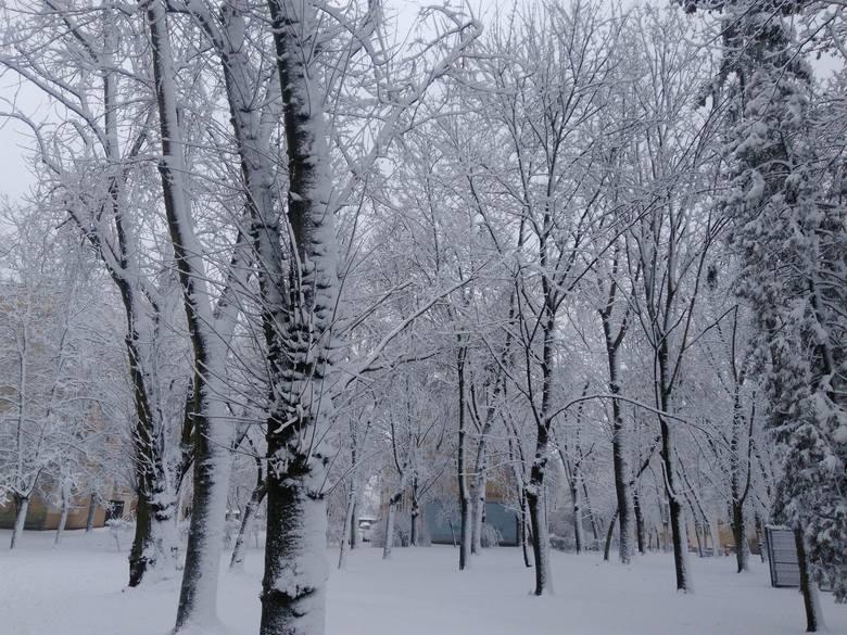 W koluszkowskich parkach ruszyły pierwsze prace rewitalizacyjne