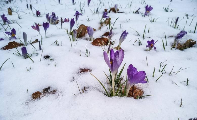 Czekacie już na wiosnę? Ta kalendarzowa zaczyna się jutro. Tymczasem dziś od godziny 21 do soboty do godziny 11.30 na sporym obszarze Dolnego Śląska