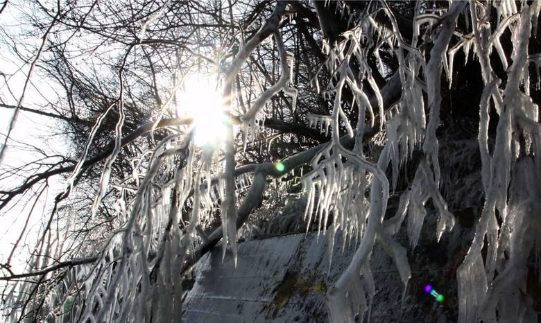 - W najbliższych dniach w województwie podlaskim temperatura w ciągu dnia i w nocy będzie znacząco spadała - informuje Magdalena Pękala z Miejskiego
