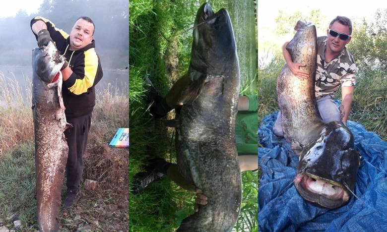 To nie ryby, a prawdziwe giganty złowione w Lubuskiem! Wędkarstwo to piękna pasja. Zobaczcie, co złowili nasi Czytelnicy