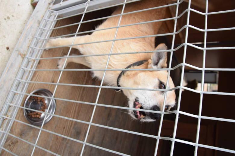 Wielogłowy: Pomocowa kampania dla bezdomnych zwierząt
