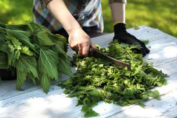 Pokrzywa to popularne ziele o działaniu moczopędnym. Obniża poziom złego cholesterolu i ciśnienie tętnicze krwi. Pomoże przy nadmiernym wypadaniu włosów