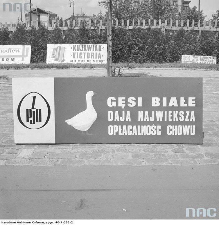 Baner reklamowy Zjednoczenia Przemysłu Jajczarsko-Drobiarskiego na trasie Wyścigu Pokoju