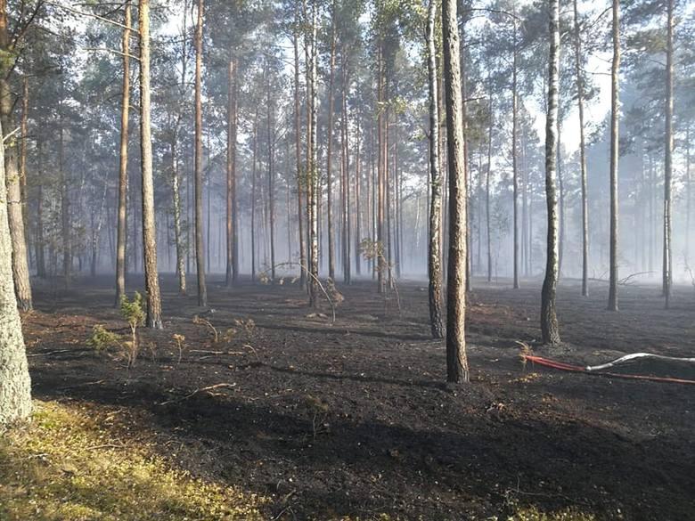 Pożar lasu w Kwiatkowie gm. Chorzele 02.07.2019. Spłonęło 3,5 hektara