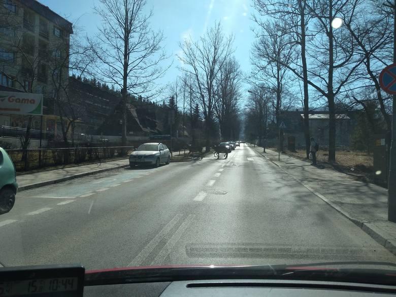 Łanie przechodzą przez przejścia dla pieszych na ulicy Jagiellońskiej