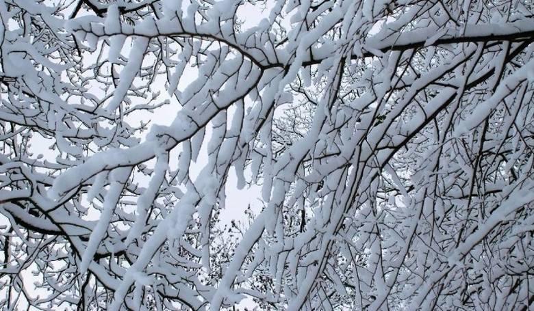 Pogoda na święta Bożego Narodzenia 2019: kiedy spadnie śnieg? Czy w święta będzie biało, a może raczej deszczowo? Sprawdźcie! [13.12]