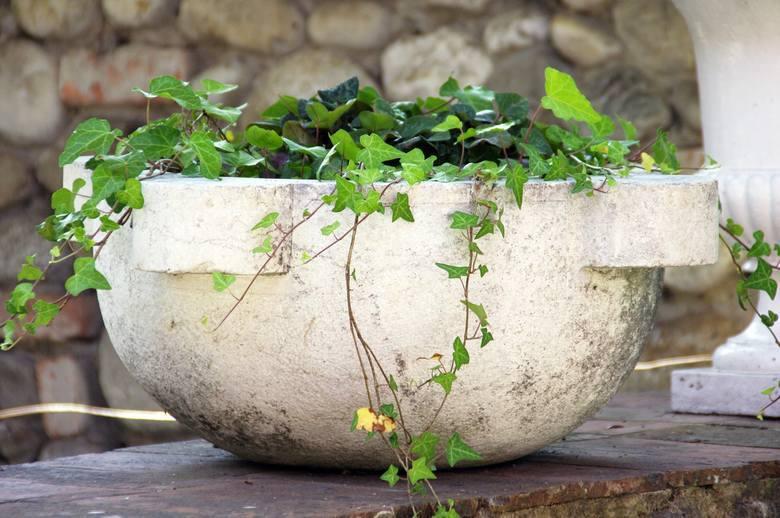 Niektóre rośliny domowe mają właściwości lecznicze albo... trujące. Sprawdź, które trujące rośliny doniczkowe masz w domu. Jak się z nimi bezpiecznie