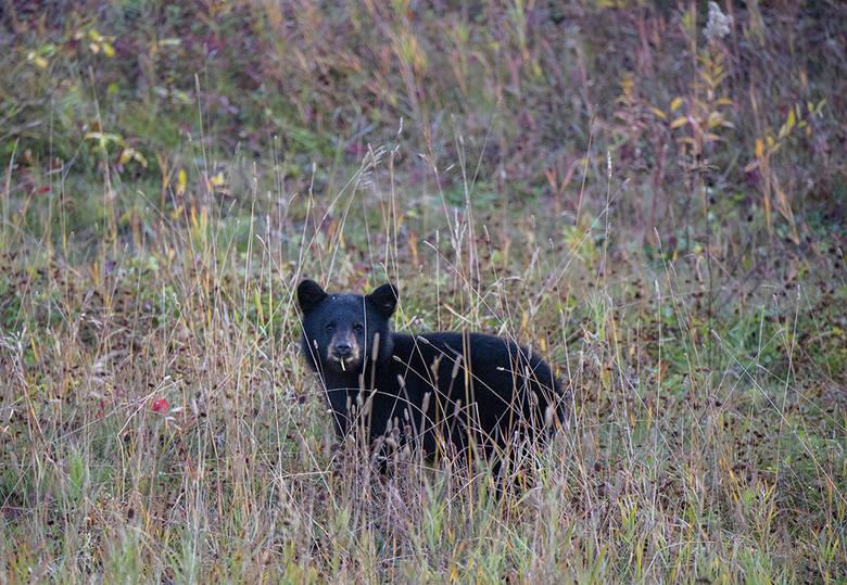 Więcej zdjęć z wyprawy można zobaczyć na blogu podróżników: www.thevanescape.com.<br /> <strong>W piątek opublikujemy rozmowę z podróżnikami. </strong>Zapytamy, jak prawić komplementy niedźwiedziom? Czy łatwo jest spotkać za oceanem innych Polaków, którzy nie uznają wycieczek organizowanych przez biura...