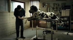 """4. """"Dogman"""", reż. Matteo Garrone, Francja, Włochy""""Ile jesteś w stanie znieść""""? - pyta w swoim filmie Matteo Garrone. Jego bohater - rewelacyjny naturszczyk"""