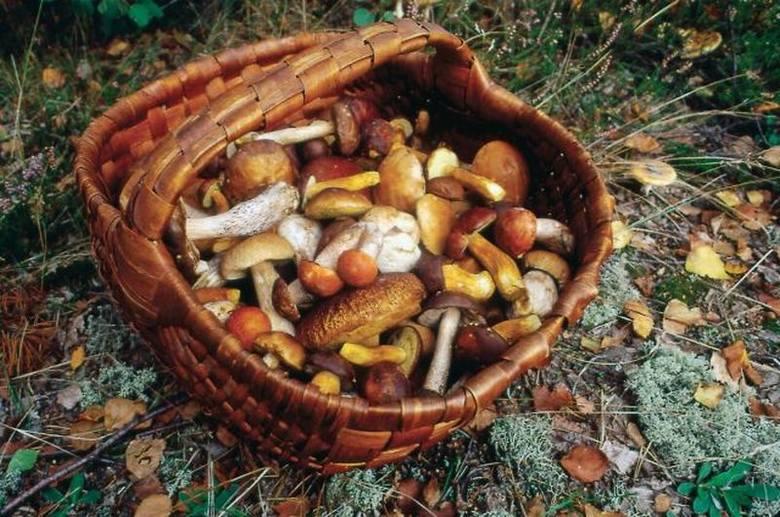 Ostrów Mazowiecka. Wystawa grzybów w sanepidzie. Koniecznie obejrzyjcie, bo warto wiedzieć, co rośnie w lesie