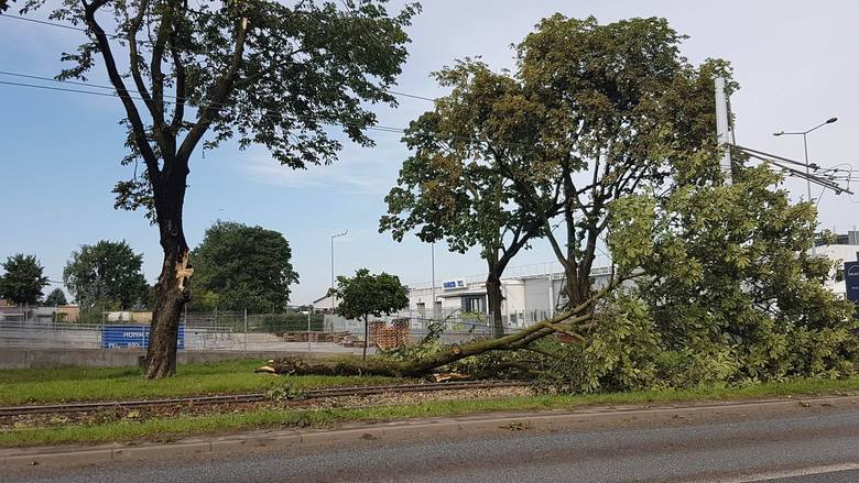 Ulica Zgierska: drzewo powalone na tory tramwajowe