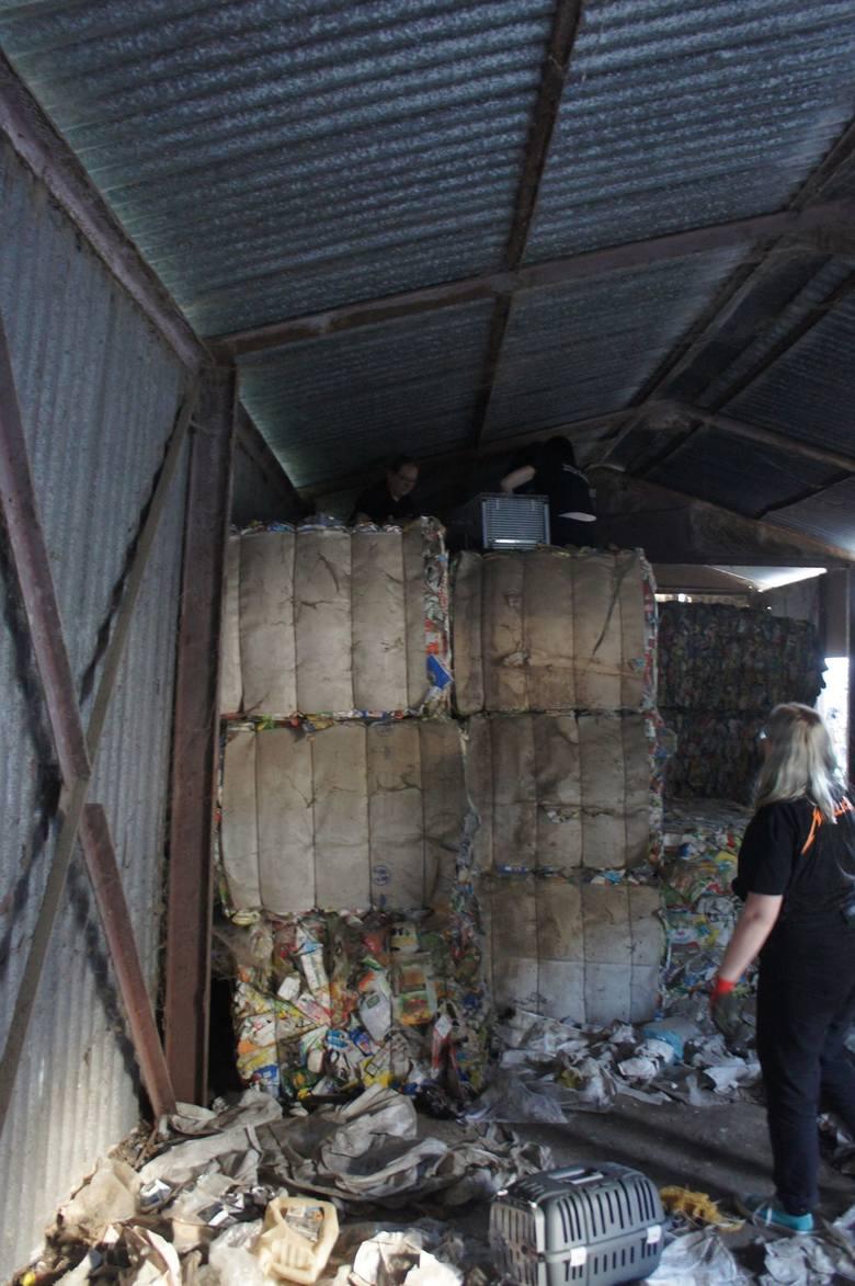 Tarnów. Animalsi pomogli ukrywającym się w śmieciach szczeniaczkom. Bezpańskich zwierząt w Mościcach jest wiecej