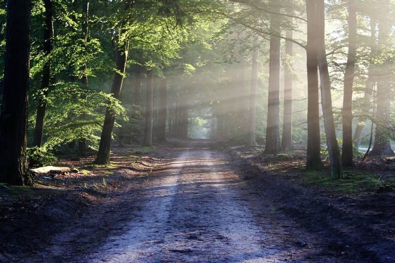 Bushcrafting będzie możliwy w 38 miejscach wyznaczonych przez  Regionalną Dyrekcję Lasów Państwowych w Katowicach.