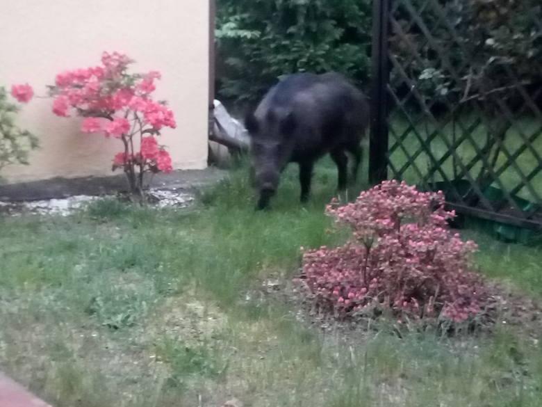 Zwierzęta można spotkać we wszystkich częściach miasta.