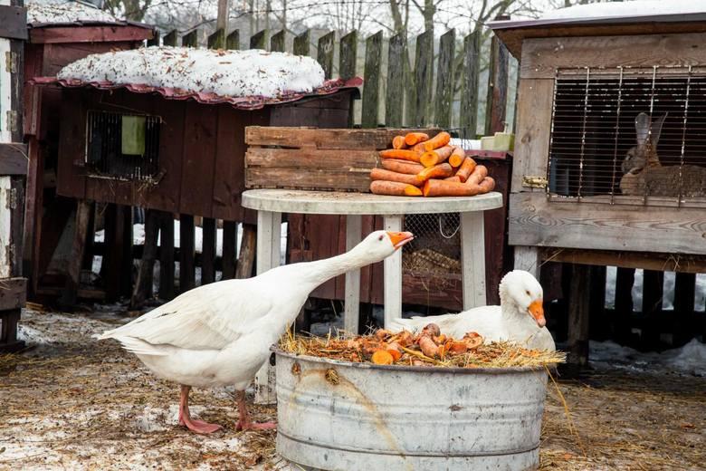 Odwiedziliśmy najsłynniejszą rolniczkę w Polsce. Zobacz, co słychać w jej gospodarstwie