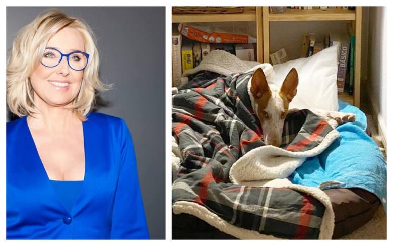 Agata Młynarska i jej męża Przemysława Schmidta łączy miłość do psów. W swoim polskim domu mają dwa hawańczyki, Bolka i Lolka. Teraz wzbogacili się o
