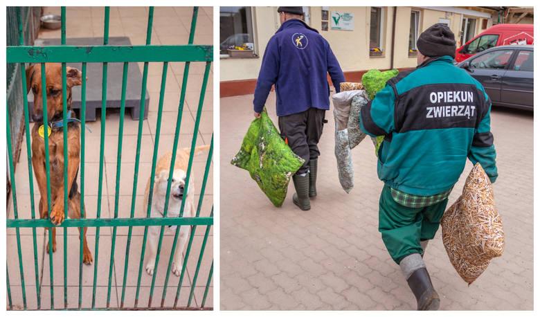 Bezdomne zwierzaki dostały nowe legowiska. To prezent od szczecińskiej marki i... więźniów [ZDJĘCIA]