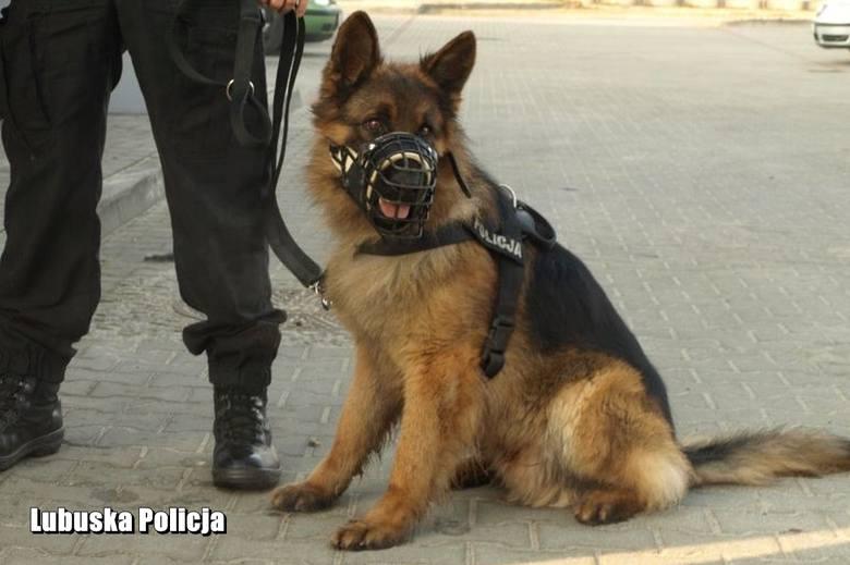 policja w żaganiu pies alex odszedł na emeryture