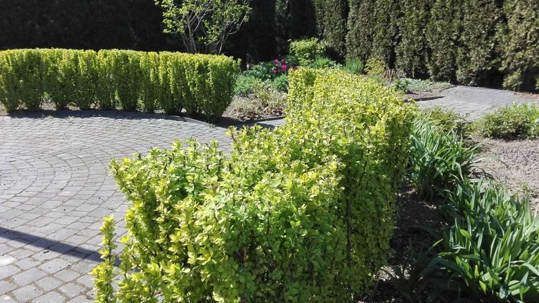 To wyjątkowe miejsce na odwiedziny o każdej porze roku. Pełne zapachów, kolorów i wyjątkowych roślin. Idealne miejsce na spacery rodzinne, romantyczne randki czy plenery fotograficzne. <br /> <br /> <br />...