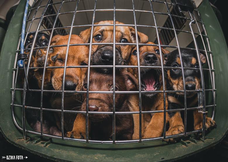 Psi fotograf z Poznania Błażej Kujawa, autor Dzikiej Foty: Czasami wyję jak wilk za obiektywem w nadziei, że pies na mnie spojrzy