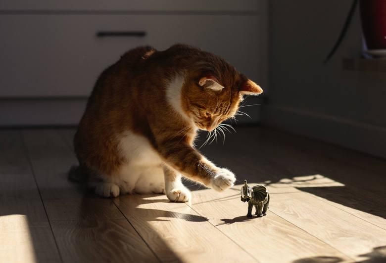 """Kilka dni temu publikowaliśmy zdjęcia przeuroczych kotów naszych Czytelników. Okazało się, że pomysł pokazywania na łamach """"GL"""" tych kochanych i zabawnych"""