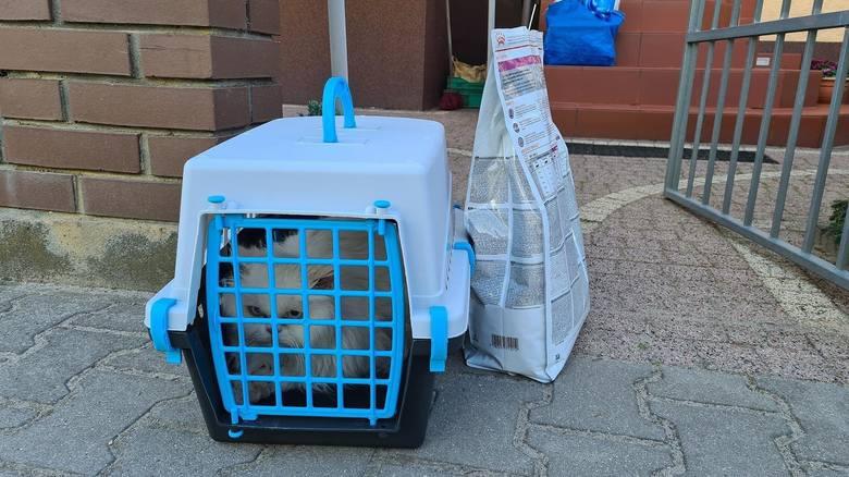 Kot jest już bezpieczny. Fundacja, która się nim zaopiekowała przekazała, że zwierzę jest mocno wystraszone