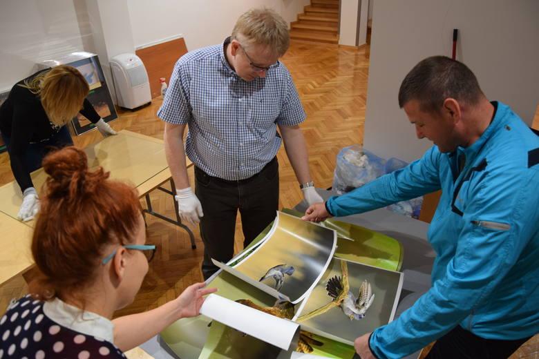 Ostatnie chwile podczas przygotowania ekspozycji zdjęć w Muzeum Miejskim. Dojechały najnowsze ujęcia m.in. kukułki