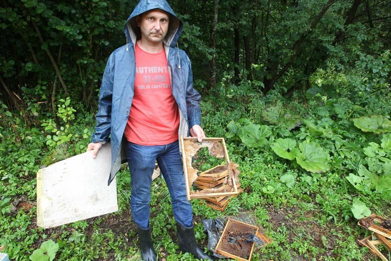 Tyle zostaje z ula, który pada ofiarą niedźwiedzia zadomowionego w lesie niedaleko Chorzowa. Drapieżnik zniszczył ich już 11, wyjadając nawet pszczoły