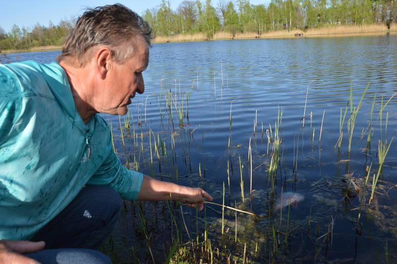 - Na łowisku codziennie pojawia się coraz więcej śniętych ryb- pokazuje Zygmunt Gorzelańczyk.
