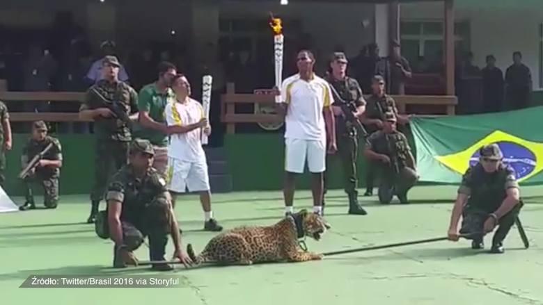 Wojsko zastrzeliło jaguara po ceremonii odpalenia znicza olimpijskiego