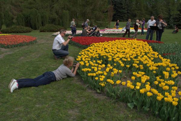Największą atrakcją majowego weekendu są wielobarwne kobierce z kwitnących dziesiątków tysięcy tulipanów.