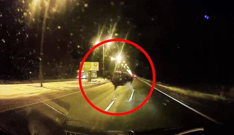 Łoś wybiegł przed nadjeżdżające auto