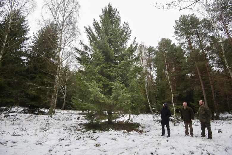 Opady śniegu stają się coraz rzadszym zjawiskiem. Z powodu ocieplenia klimatu w polskich lasach coraz rzadszym widokiem będą także świerki