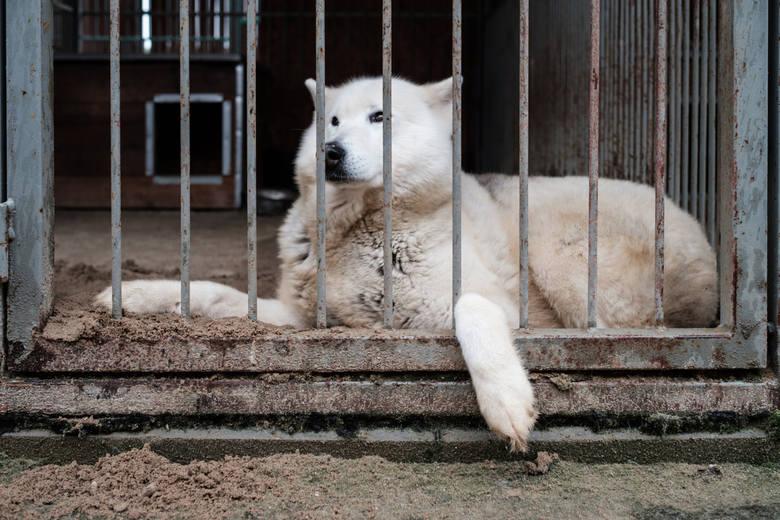 Posadówek to miejsce, gdzie psy i ludzie liżą swoje rany