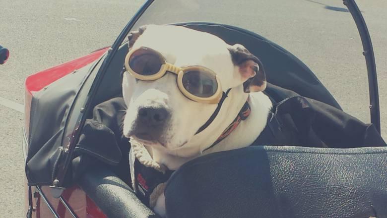 Wyjazd z psem? O tych 10 rzeczach musisz pamiętać! GALERIA
