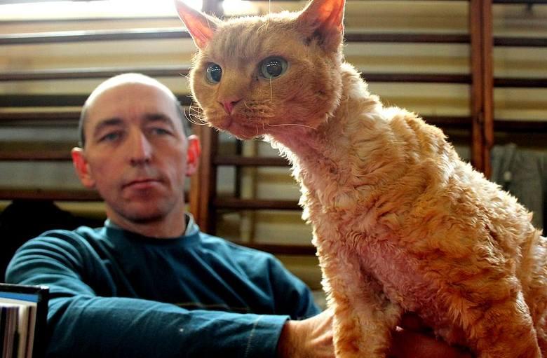 Wystawa kotów rasowych we Włocławku