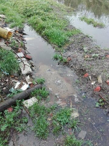 Bobry utrudniają życie w Osiekach (zdjęcia)