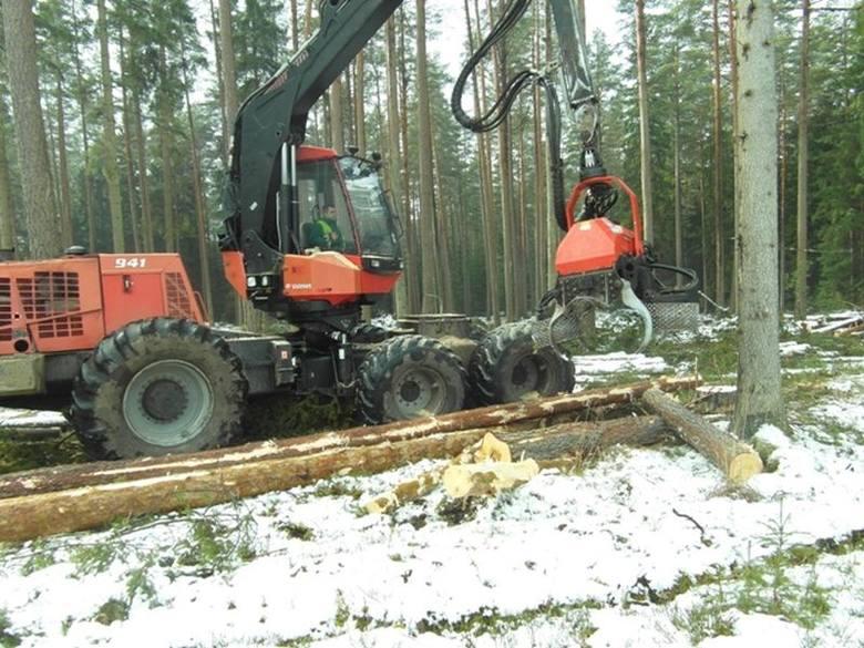 Sosna i świerk to najczęściej kupowane drewno z podlaskich lasów (zdjęcia)