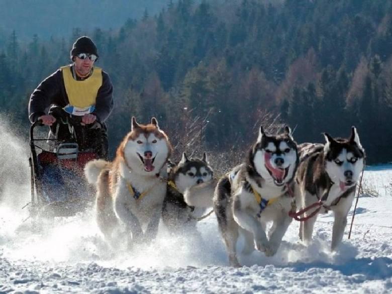 W Świątkowej Wielkiej zaczęły się zawody psich zaprzęgów