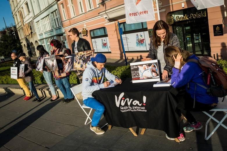 Dziś, 16 kwietnia na ulicy Mostowej w Bydgoszczy pojawili się aktywiści organizacji Viva! Akcja dla zwierząt by informować bydgoszczan o okrucieństwie